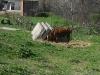caw near ex pesticide storage in kakheti
